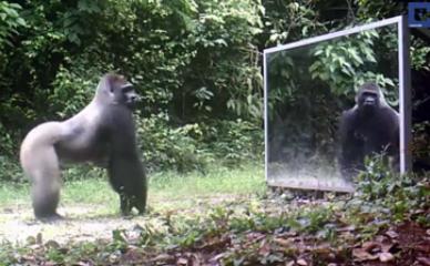 Životinje po prvi put vide svoj odraz u ogledalu (video)