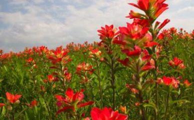 5 cvetnih esencija koje vas uspešno pripremaju za letnje radosti