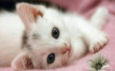 12 stvari koje niste znali o mačkama