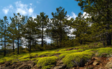 Divčibare - dragulj valjevskih planina
