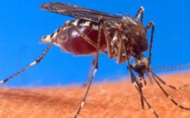 Top 9 prirodnih sredstava za zaštitu od komaraca